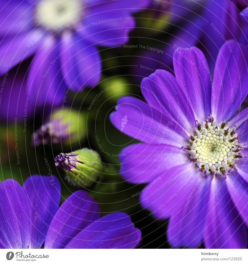 Nature Plant Beautiful Colour White Summer Flower Spring Blossom Background picture Feasts & Celebrations Park Growth Fresh Violet Bud