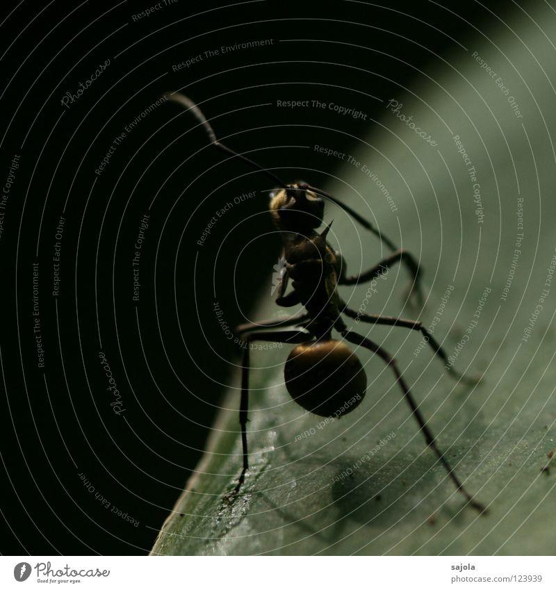 Leaf Animal Dark Legs Asia Insect Cute Feeler Singapore Ant