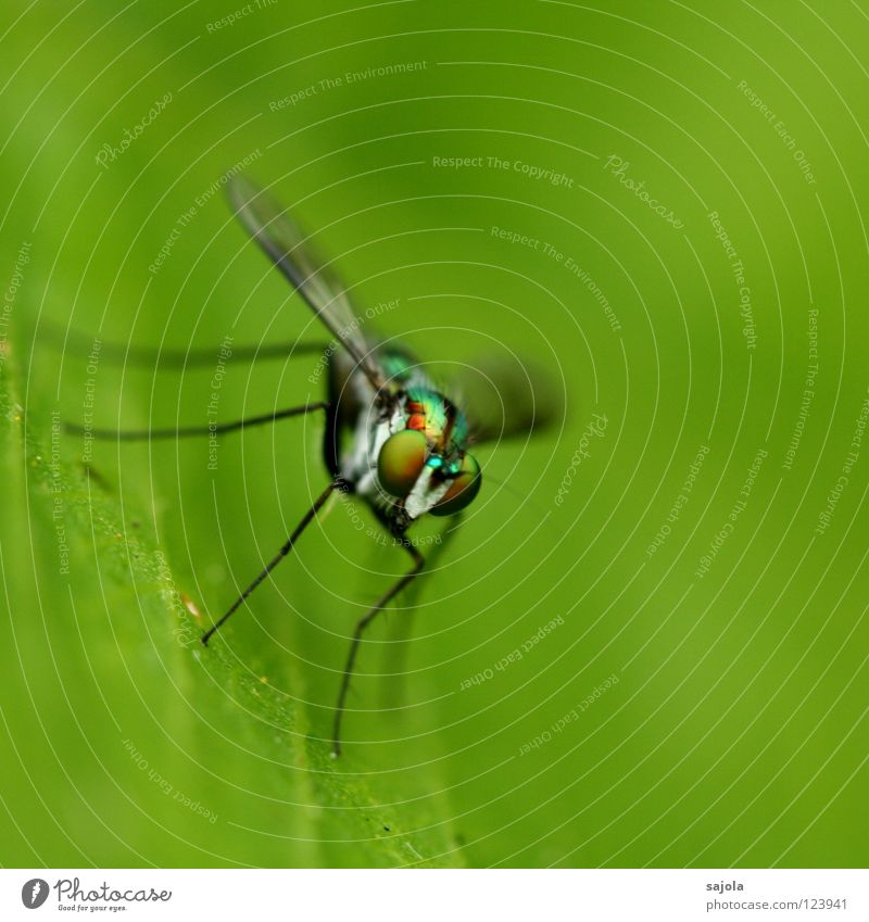 Animal Leaf Eyes Head Legs Fly Wing Asia Thin Insect Virgin forest Pole Singapore Compound eye