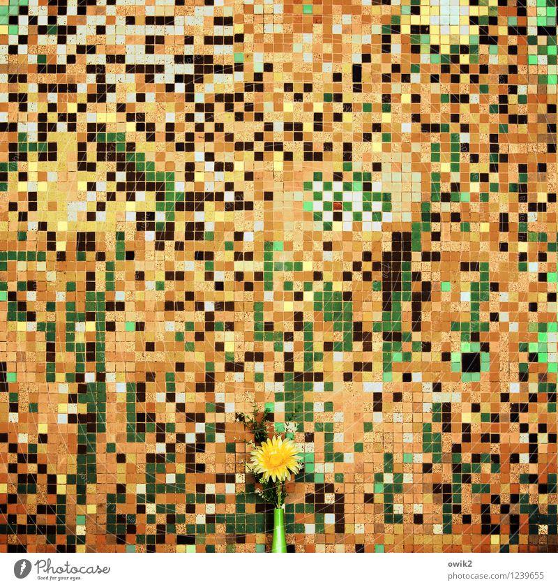 Green Flower Black Yellow Blossom Emotions Style Stone Brown Moody Art Orange Design Idyll Gold Crazy