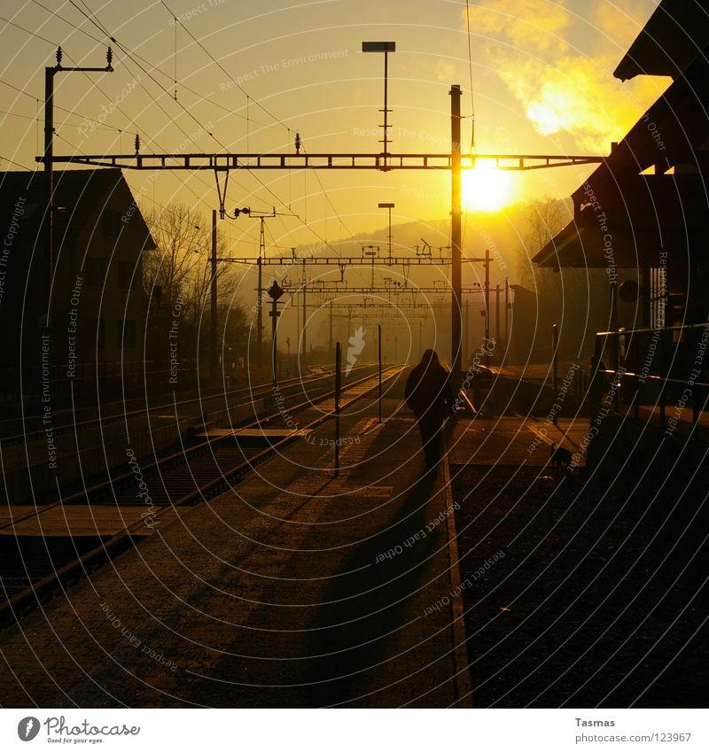 Woman Sun Winter Dog Moody Beginning Railroad Peace Railroad tracks Smoke Train station Ambience Early riser
