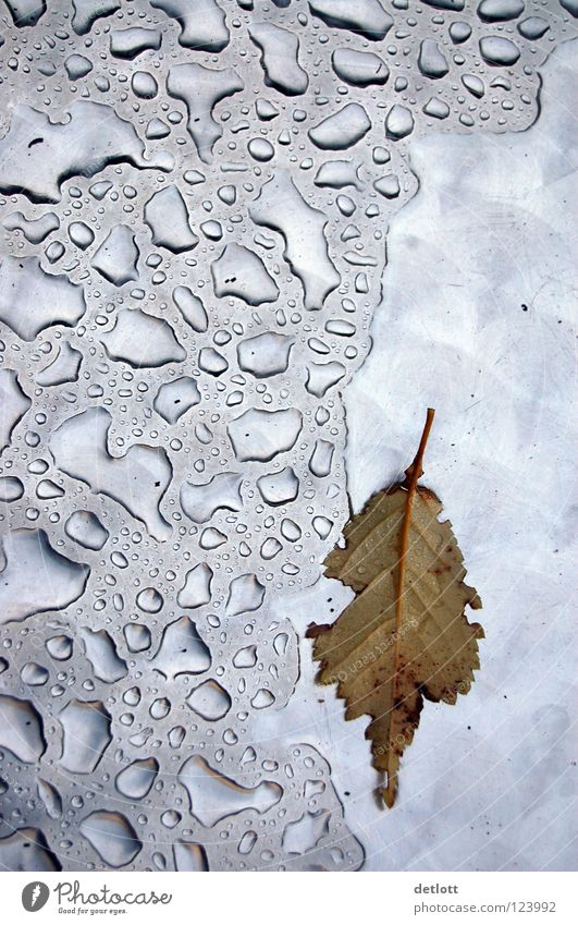 Water Leaf Cold Autumn Rain Weather Drops of water Wet Transience Seasons Silver Comfortless