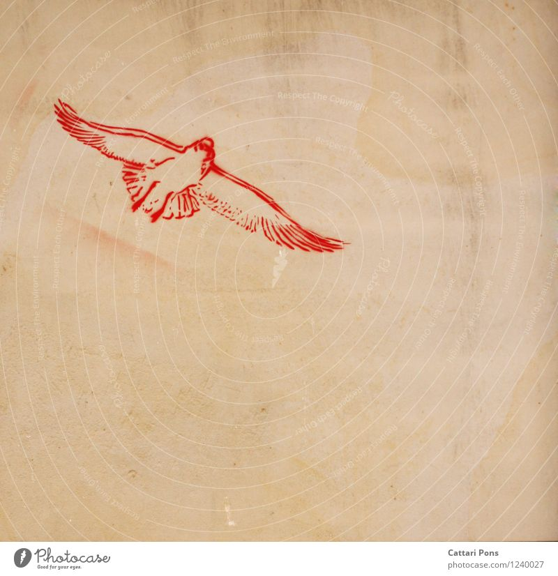 birds flying high Art Graffiti Animal Bird 1 Stone Simple Free Modern Red Image Wall (building) Hope Colour photo Exterior shot Copy Space right