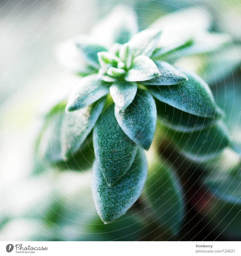 Nature Tree Green Plant Vacation & Travel Leaf Park Landscape Background picture Fresh Growth Bushes Botany Florida Gardener Flourish