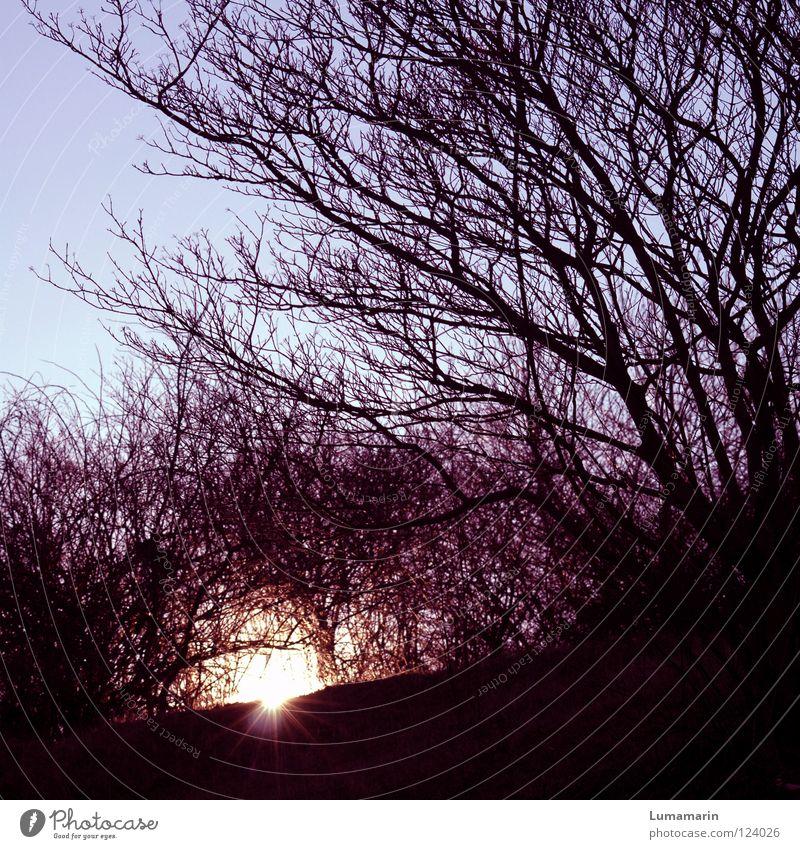 Beautiful Sky Tree Sun Winter Dark Warmth Graffiti Power Glittering Going Force Sleep Hope Energy industry Bushes