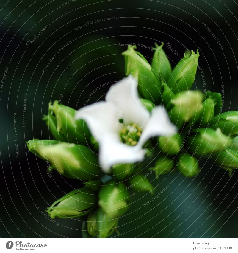 Nature Plant Beautiful Colour White Summer Flower Spring Blossom Background picture Growth Fresh Bud Botany Blossom leave Salutation