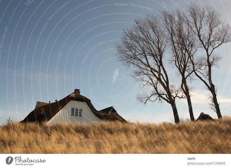 Beach House (Residential Structure) Coast Common Reed Beach dune Darss Dike Ahrenshoop