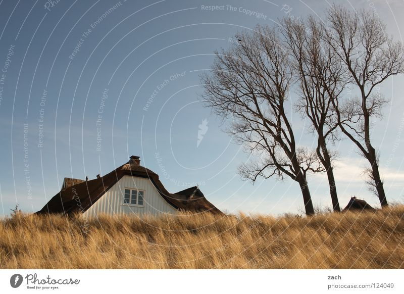 Hidden House (Residential Structure) Beach Coast Darss Dike Ahrenshoop Common Reed Beach dune reed