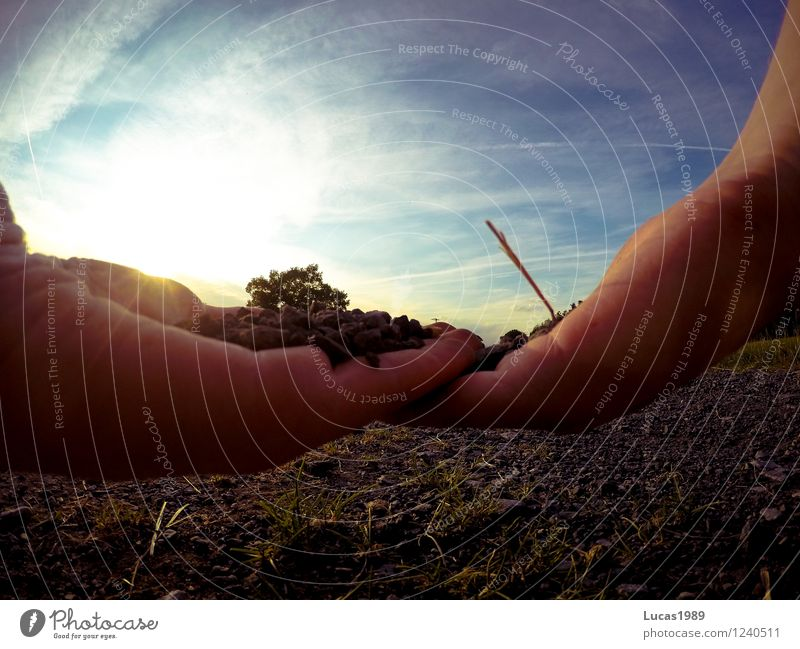 Mother Earth Hand 1 Human being Nature Elements Sand Sky Clouds Sun Sunrise Sunset Summer Climate Beautiful weather Garden Park Meadow Field Forest Touch Stop