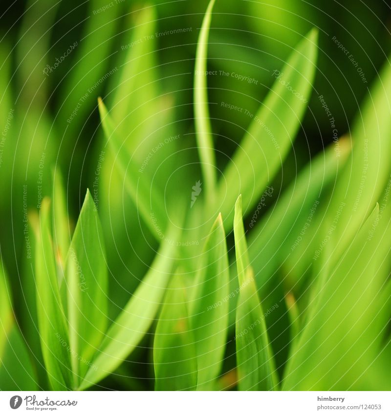 grass whispering Green Florida Botany Virgin forest Background picture Park Bahamas Beach Vacation & Travel Fresh Plant Growth Grass Macro (Extreme close-up)