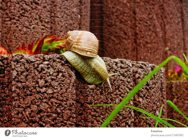 departure Environment Nature Plant Animal Garden Snail 1 Bright Small Natural Slimy Brown Crawl Vineyard snail Large garden snail shell Rock garden