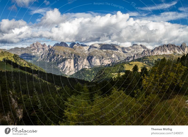 Dolomites Summer Mountain Hiking Nature Landscape Sky Clouds Beautiful weather Flower Forest Alps Gigantic Infinity Calm Wanderlust Trentino-Alto Adige Blue sky