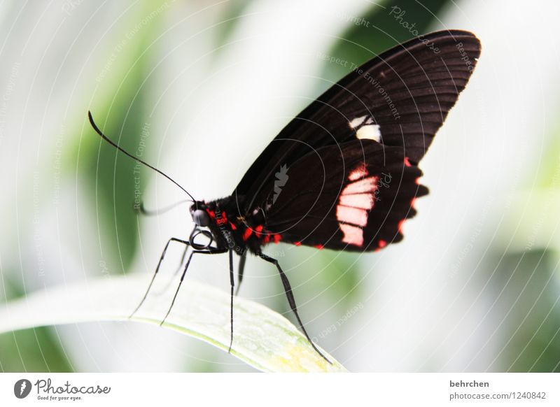 flamboyant Nature Plant Animal Spring Summer Tree Bushes Leaf Garden Park Meadow Wild animal Butterfly Animal face Wing 1 Observe Relaxation Flying To feed Sit