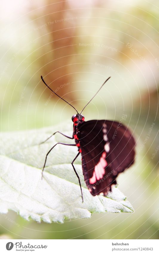 filigree Spring Summer Autumn Plant Bushes Leaf Butterfly Wing Observe Flying Sit Stand Wait Exceptional Exotic Beautiful Green Red Black Feeler Legs Delicate