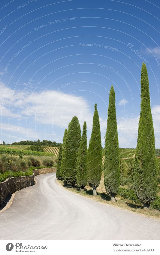 A typical landscape of Tuscany Alcoholic drinks Summer Clouds Warmth Tree Hill Street Stone Blue Green Red Serene Cypress direction Farm Fencing Italy panorama