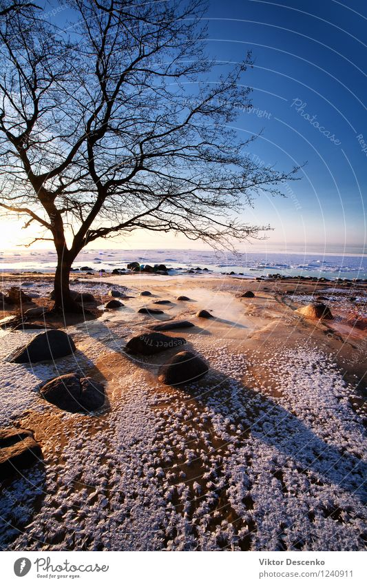 Bare tree in winter on the beach by the sea Vacation & Travel Man Green White Sun Tree Ocean Loneliness Beach Winter Adults Autumn Natural Coast Stone Horizon