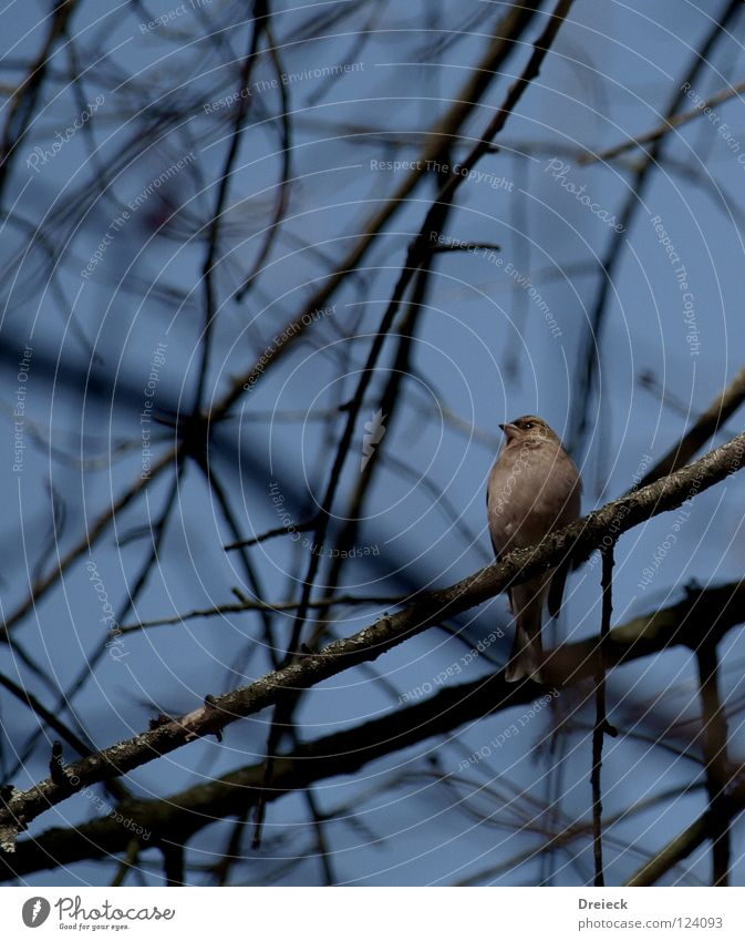 Sky Nature Blue Tree Animal Leaf Landscape Dark Air Bird Brown Flying Crazy Bushes Feather Beautiful weather