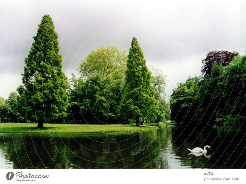 landscape park Park Rotterdam Swan Tree Wide angle Landscape lake green