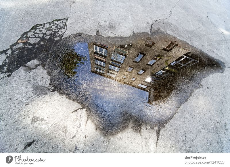 There's a house growing in the puddle. Vacation & Travel Tourism Far-off places Sightseeing Environment Downtown House (Residential Structure) Dream house