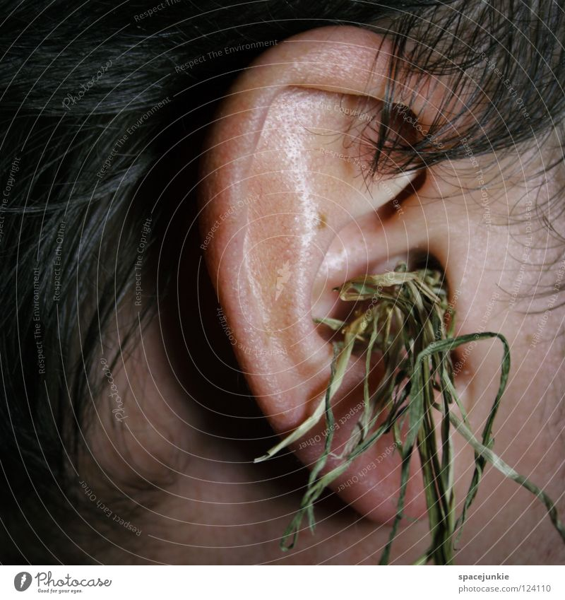 grass whispering Man Outer ear Grass Straw Figure of speech Stupid Doofus Smart Clever Humor Whimsical Joy Hair and hairstyles Ear stupidity IQ Know ignorance