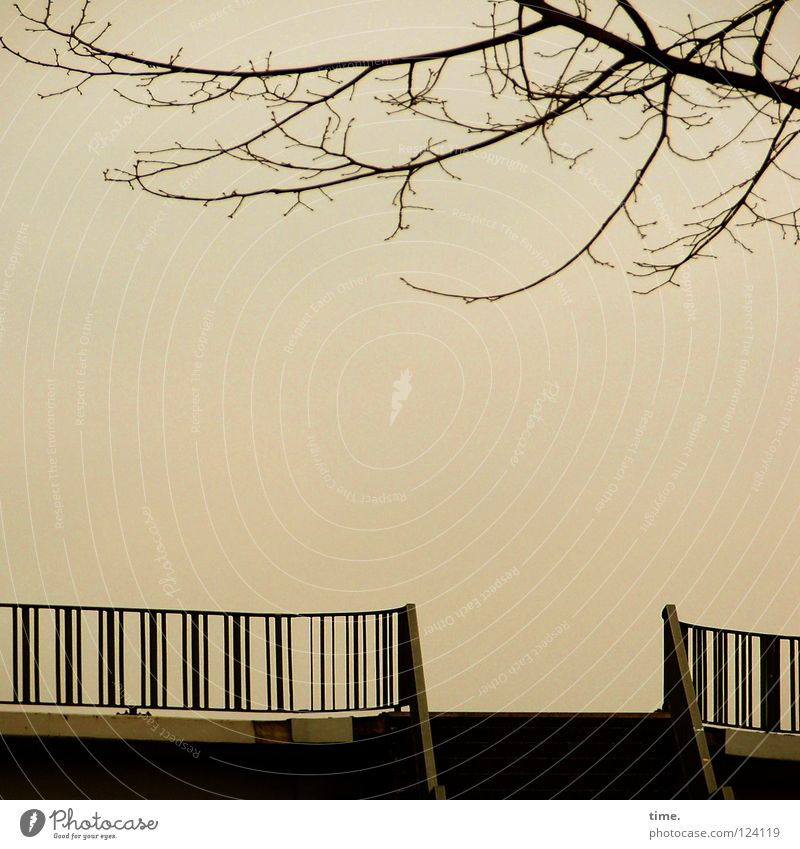Sky Tree Winter Calm Far-off places Metal Concrete Empty Stairs Bridge Open Deep Handrail Hover Dusk Aspire