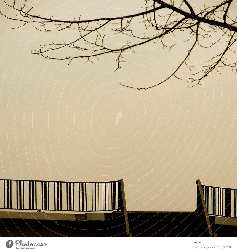 Sky Tree Winter Calm Far-off places Metal Concrete Empty Stairs Bridge Open Deep Handrail Hover Dusk Aspire