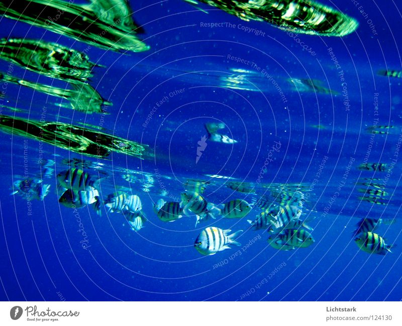 Water Green Vacation & Travel Ocean Colour Calm Waves Swimming & Bathing Power Energy industry Fish Peace Dive Africa Tile Refreshment