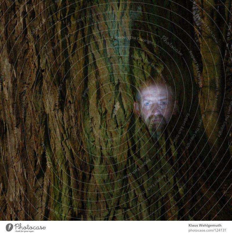 Tree Face Creepy Tree trunk Ghosts & Spectres  Mystic Tree bark Eerie Moon Full  moon