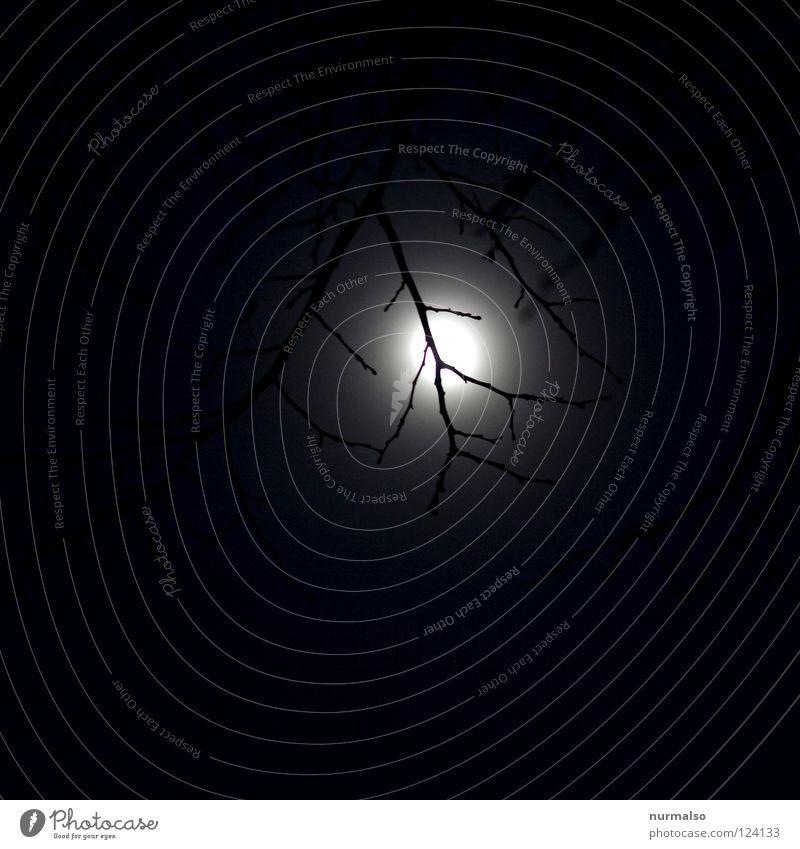 The night before Night Tree Creepy Wolf Fairy tale Graphic Lighting Moonlight Dark Black Fine Novella Hand Ambiguous Eerie Bland Invisible Flashlight Lamp