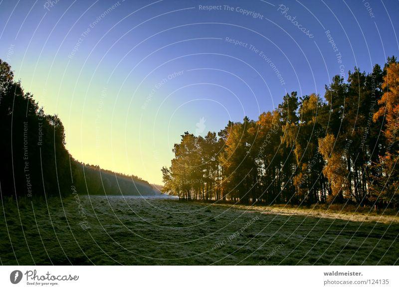 Sky Tree Forest Autumn Meadow Fog