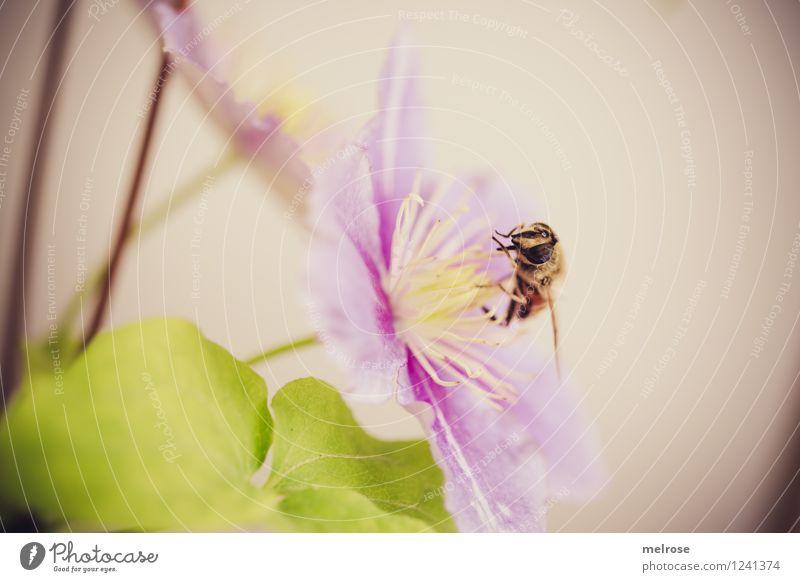 Nature Plant Green Summer Flower Leaf Animal Yellow Eyes Blossom Style Eating Garden Flying Pink Elegant