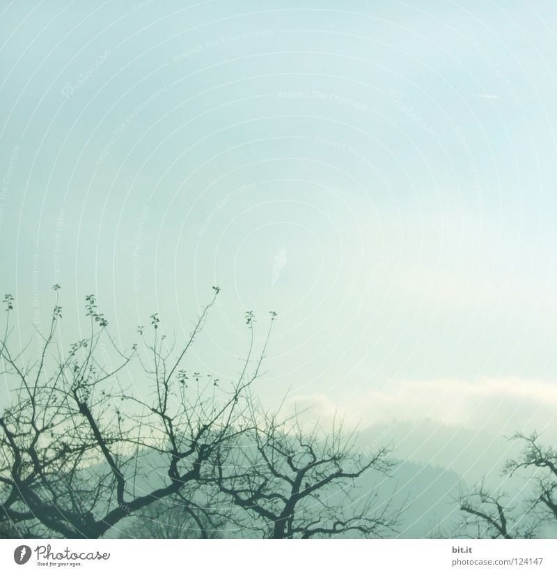 BOSCOP Tree Fog Sky Winter Cold Headstrong Market garden Foreground Background picture Soft Delicate Blown away Sanddrift Warped Fir tree Forest Tentacle