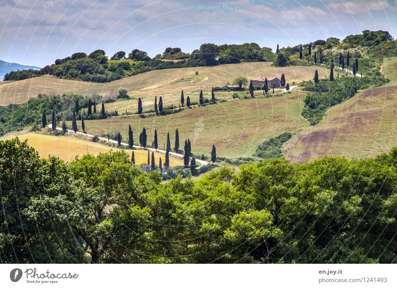 back and forth Vacation & Travel Trip Summer Summer vacation Sky Beautiful weather Tree Cypress cypress avenue Avenue Meadow Forest Hill Tuscany Italy