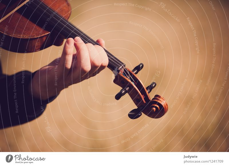 finger exercise Leisure and hobbies Playing Summer Music Human being Masculine Hand Concert Outdoor festival Musician Violin Nature Autumn Beautiful weather