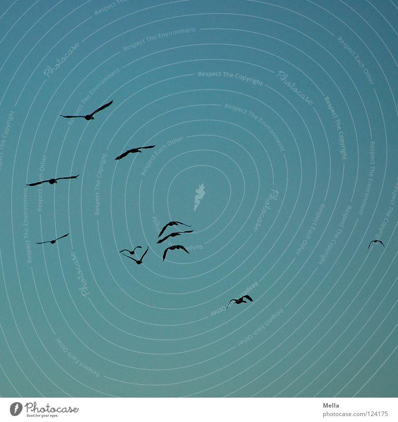 Sky Blue Far-off places Lanes & trails Bird Tall Aviation Wing Longing Doomed Wanderlust Formation Flock Cormorant