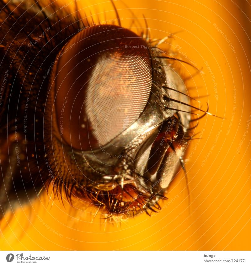 multifaceted Compound eye Mandible Insect Near Animal Looking Intuition Watchfulness Macro (Extreme close-up) Close-up Fly Eyes Detail
