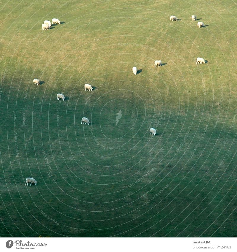Vacation & Travel Green White Calm Animal Far-off places Grass Background picture Art Gray Food Masculine Multiple Nutrition Lawn Agriculture