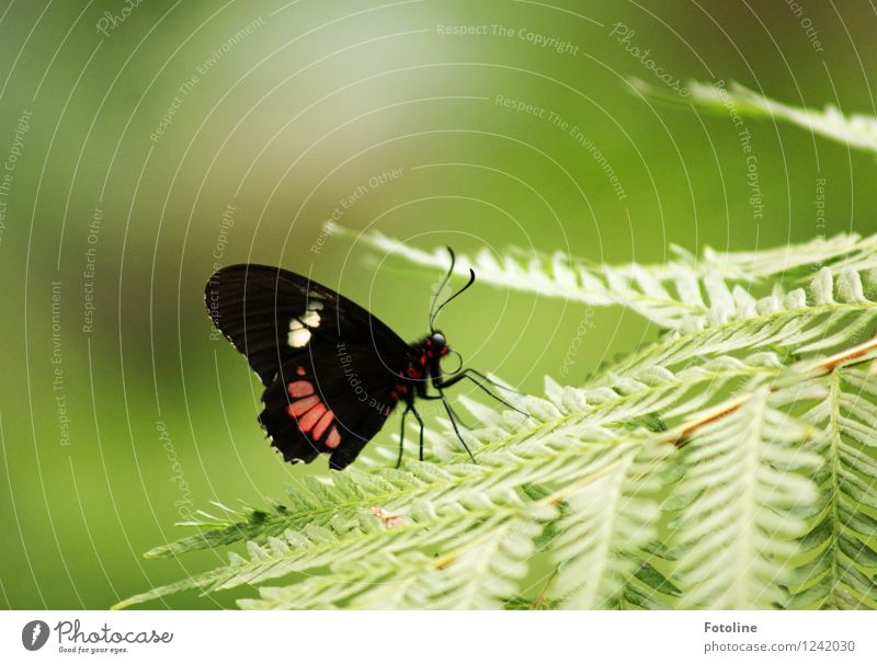 breather Environment Nature Plant Animal Summer Fern Butterfly Wing 1 Free Near Natural Green Red Black Colour photo Multicoloured Exterior shot Close-up