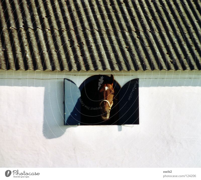 month Animal Wall (barrier) Wall (building) Facade Window Roof Barn Stable Horse 1 Looking Curiosity White Salutation Corrugated sheet iron Horse breeding