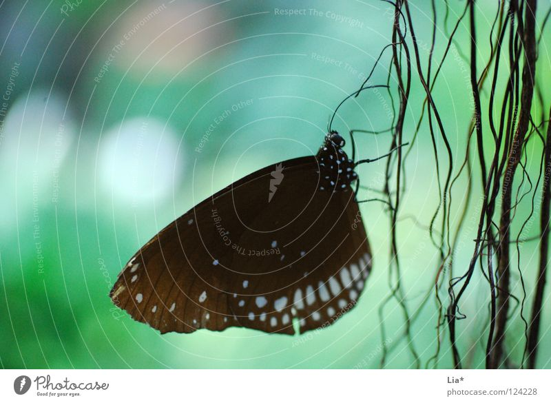 Nature White Beautiful Black Sit Stripe Wing Point Delicate Insect Butterfly Easy Fine Graceful