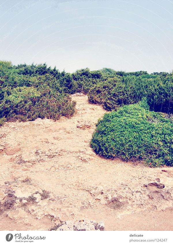 Green Summer Beach Vacation & Travel Stone Landscape Brown Coast Bushes Majorca 2007