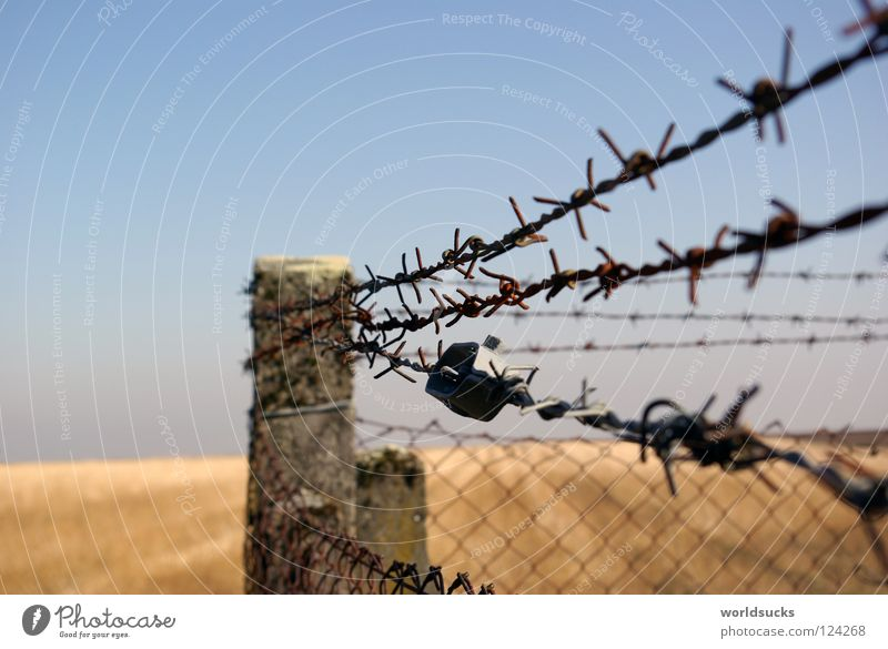 Spiny Affair Fence Barbed wire Wire Field Barrier Closed Wire netting Wire netting fence Concrete Abstract Exterior shot Captured Confine Barred Safety