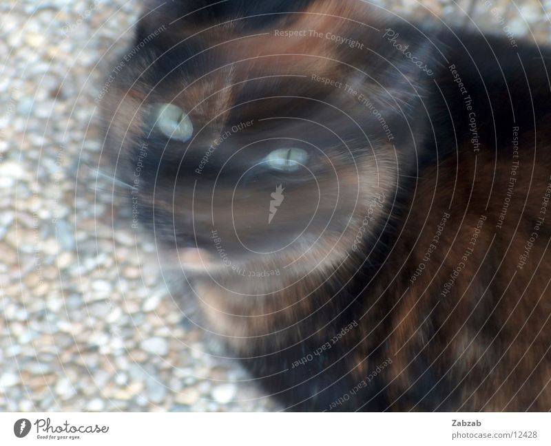 head crab Cat Filming Black Brown Animal House (Residential Structure) Gravel Eyes Ear Nose Movement tortoiseshell Looking Stone
