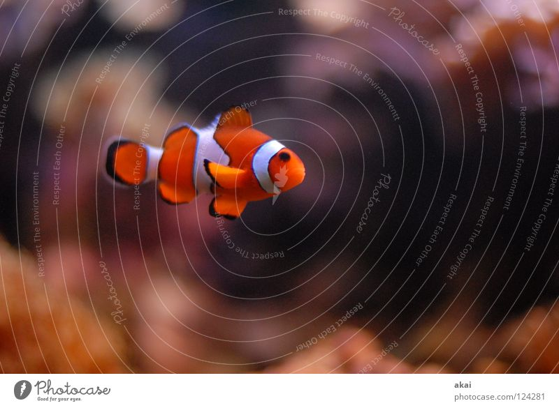 Little Clown Aquarium Clown fish Finding Nemo Dark Warped Motion blur Blur Fish courtyard of the mouth Freiburg im Breisgau user meeting akai joerg jörg