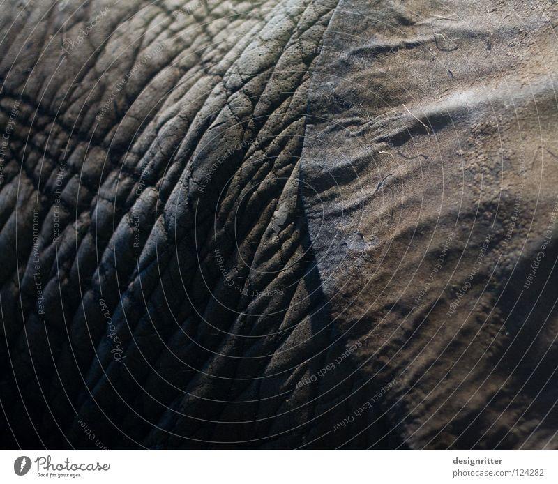 hearkening Leather Dark Black Animal Elephant Listening Sense of hearing Elefantears Harm Protection Safety Ignore Private Private sphere Pore