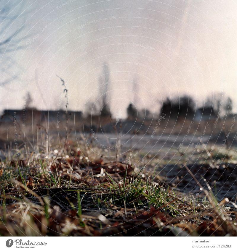 a morning like this Field Grass Plant Bushes Untidy Blade of grass Blur Brandenburg Fallow land Analog Medium format Negative Far-off places Horizon Concrete
