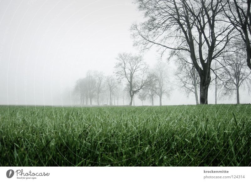 Strange, wandering in the fog. Fog Tree Meadow Autumn Switzerland Rhein valley Green Field Grass To go for a walk Branch Landscape
