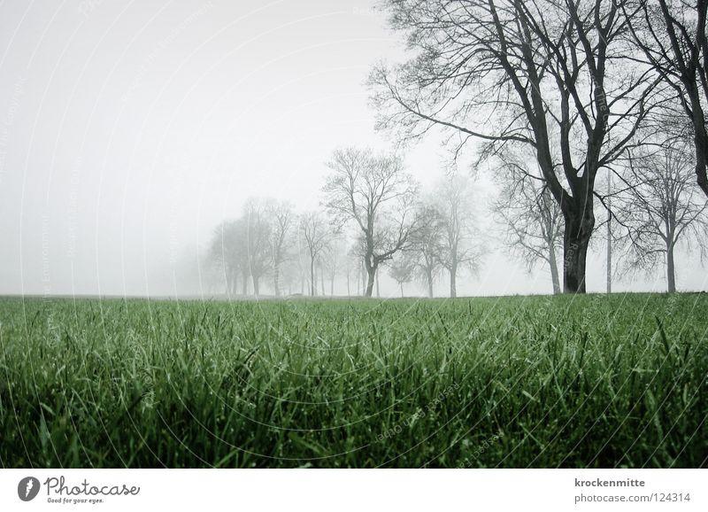 Tree Green Autumn Meadow Grass Landscape Field Fog To go for a walk Switzerland Branch Rhein valley