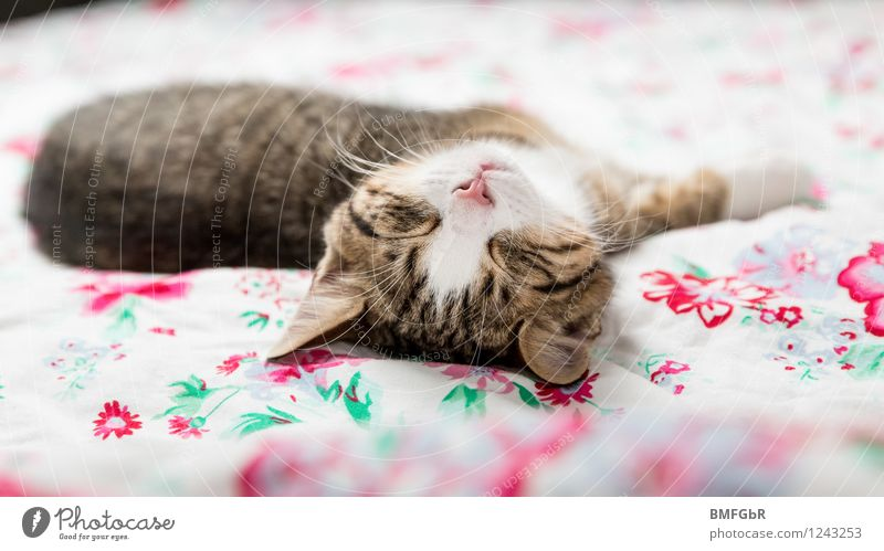 deeply relaxed Style Design Happy Harmonious Well-being Contentment Relaxation Calm Flat (apartment) Arrange Bed Bedroom Animal Pet Cat Hung-over 1 Baby animal