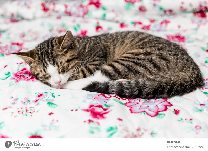 Cat Beautiful Relaxation Calm Animal House (Residential Structure) Baby animal Happy Lie Flat (apartment) Contentment Living or residing To enjoy Cute Retro